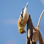 Upside down bird at Cullinan Park